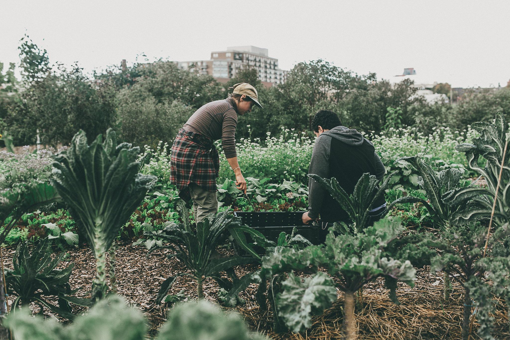 Community Compost Exchange