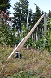 Drip Line Installation Tool for Between Mature Crops