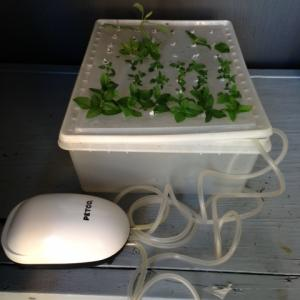"""Fish Tub"" Herb propagator Fish Tank Bubbler"