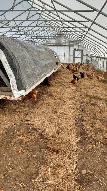 Hoop Chicken Trailer Farm Hack