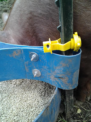 Movable Pig Feeders Farm Hack