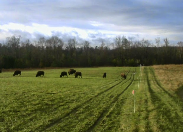 Solar powered off-grid pasture monitoring system with wifi access