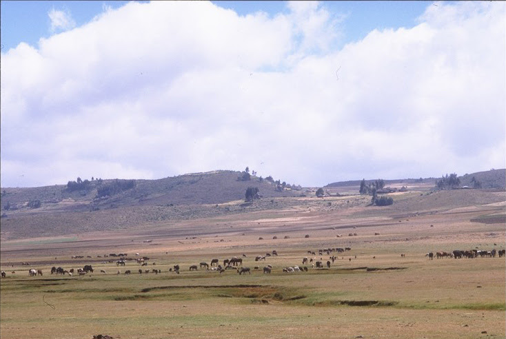New tool simulates how climate change will affect our rangelands