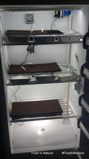 Seed Germination/Early Growth Chamber