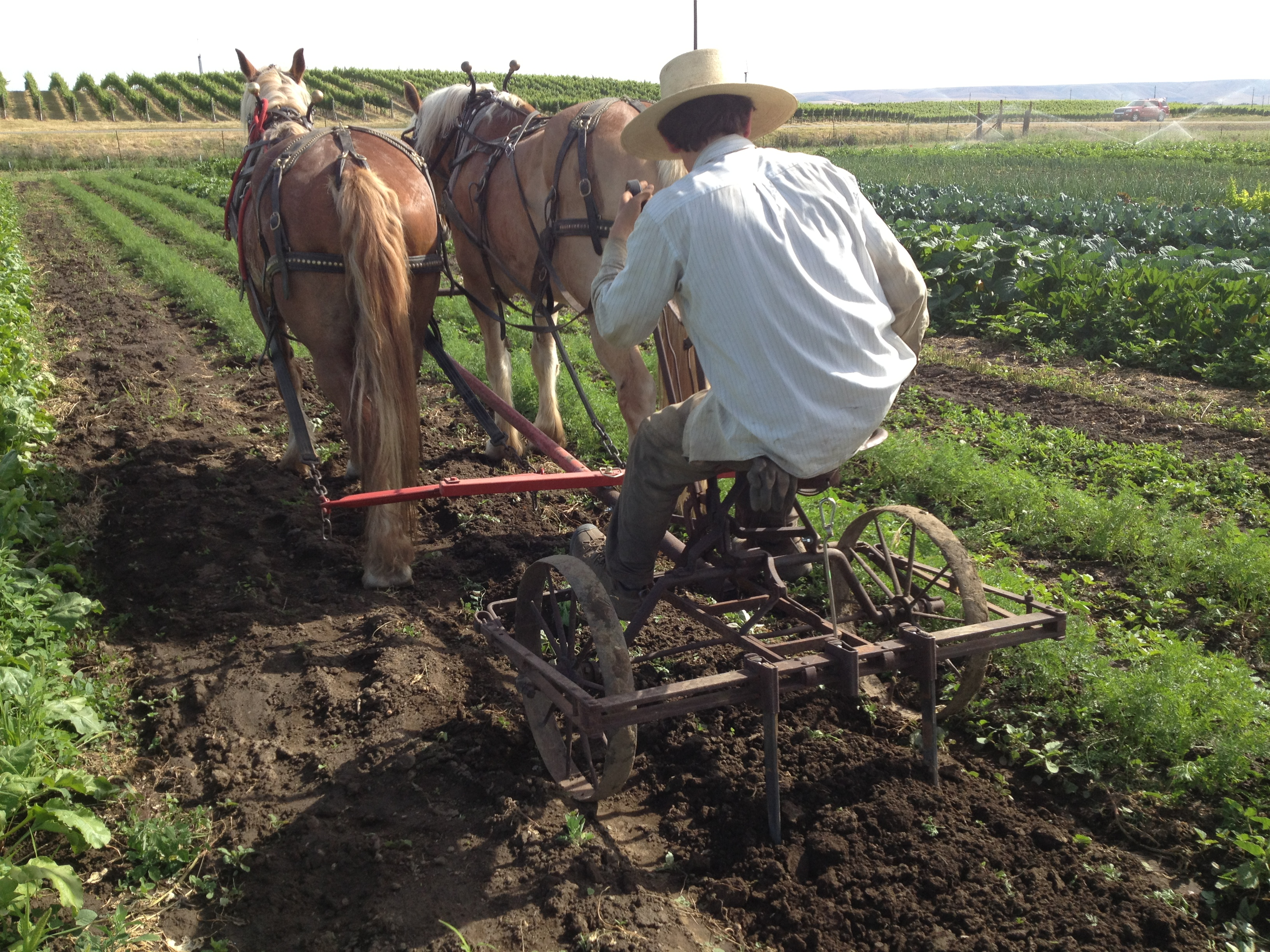 Horsedrawn Root Digger