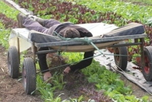 Solar Powered Lazy Weeder