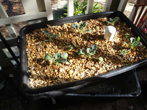 Small DIY Aquaponics System