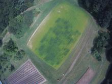 Covercrop effects on Sorgum Sudan Grass